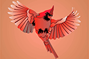 Трафарет птички Красный Кардинал 3