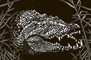 Söpö krokotiili