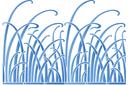 Трын-трава
