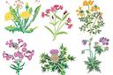Дикие цветы 1