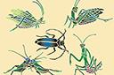 Пять насекомых