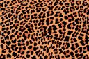 Пятна леопарда