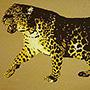 Leopardi kuvio